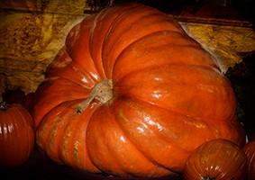 Hawthorne Pumpkins